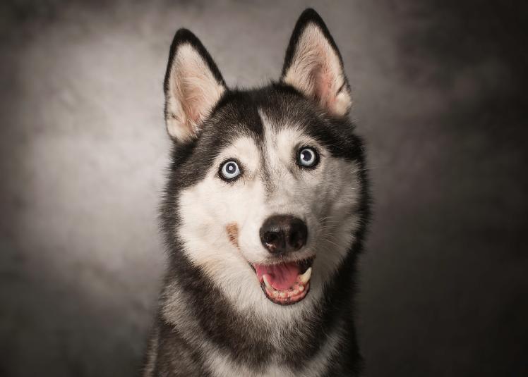 Bedwelming 8 tips voor het fotograferen van honden | Cursussen | Zoom.nl #IU23