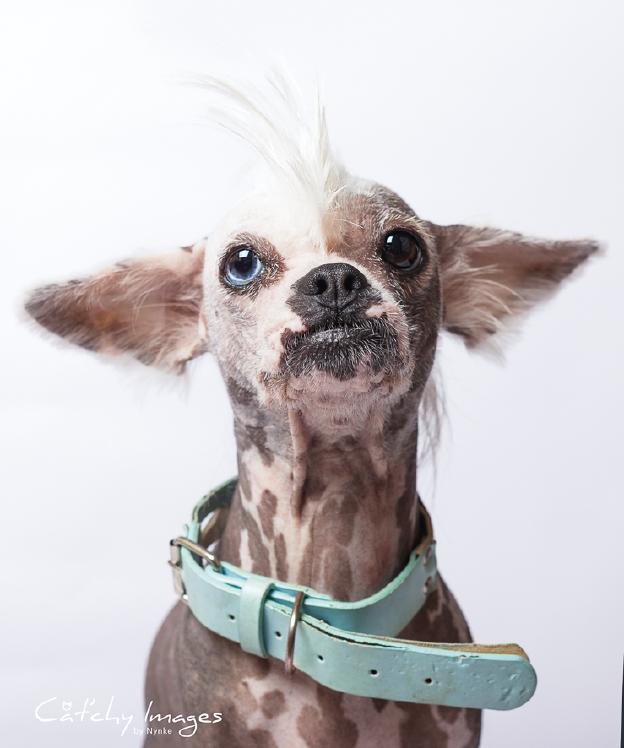 Ongekend 8 tips voor het fotograferen van honden | Cursussen | Zoom.nl AO-09