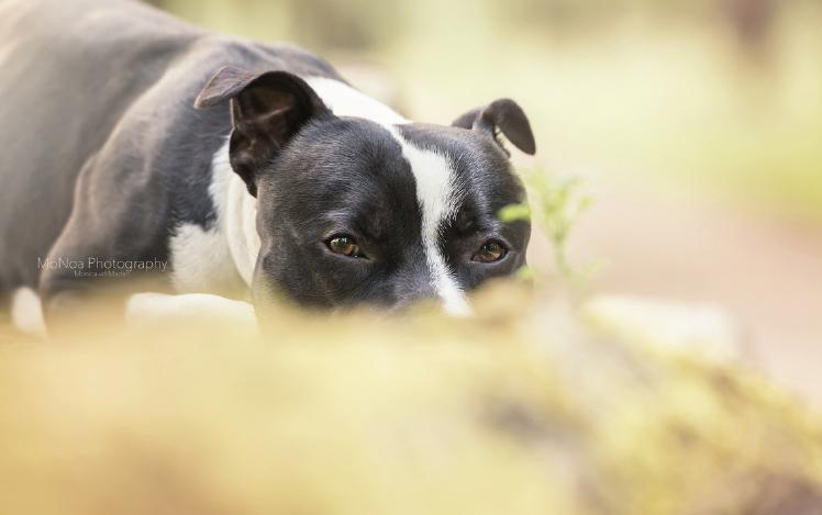 New 8 tips voor het fotograferen van honden | Cursussen | Zoom.nl @QH25