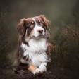 Je huisdier fotograferen: een aantal basistips