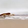5 tips voor strandfotografie
