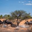 Dwars door Namibië - Op fotosafari met de Panasonic Lumix G9