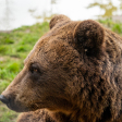 Workshop wildlifefotografie met de Panasonic DC-G9