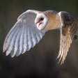Scherpstellen bij vogels en wildlife: een paar tips