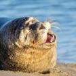 6 vrolijke dierenfoto's van Zoom.nl om Blue Monday door te komen