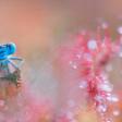 Collectie Kleurrijke Libellen