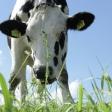 6 tips voor het fotograferen van koeien