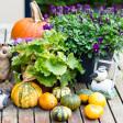 Tips - 5 ideeën om in je achtertuin te fotograferen