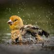 Wild fotograferen in Nederland - vogeltjes in je tuin