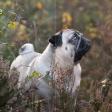 De workflow van een hondenfotograaf