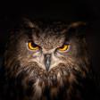 Nu op Zoom Academy: Basisboek fotografie mét online cursus