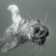 Het onbekende genre: Onderwaterfotografie