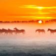 Weersvoorspelling voor fotografen - mist of een rode hemel bij zonsopkomst
