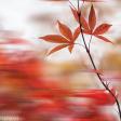 Hoe krijg je de perfecte herfstkleuren in je foto?
