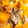 De meest bijzondere vogelfoto's van 2019