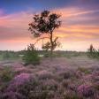 Zoom.nl Maandopdracht Augustus 2017  - Bloeiende heide!