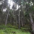 Fotodokter: de nabewerking van een boslandschap