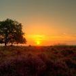 Jullie mooiste herfstlocaties in Nederland!