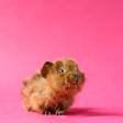 6 belangrijke tips voor huisdierfotografie