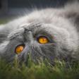 12 tips voor het fotograferen van je huisdier.