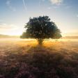 Het belang van licht bij landschapsfotografie