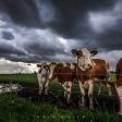 Fotograferen in de storm