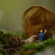 Creatieve onderwerpen voor thuis: miniatuurfotografie
