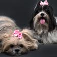 8 tips voor het fotograferen van je huisdier op dierendag