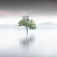 Expertuitdaging: minimalisme gebruiken voor je landschapsfoto's