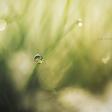 12 tips voor het fotograferen van gras