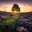 7 locaties voor de mooiste bosfoto's