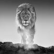 Wild van natuur: portfolio van David Yarrow