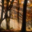 10 tips voor betere herfstfoto's