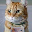 Fotograferende kat brengt fotoboek uit