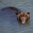 live lezersreisverslag vanuit Canada DEEL 2 | Paradijs voor wildlife-fotograferen  | door GoCanada en Air Transat