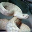 6 tipsssss voor het fotograferen van slangen