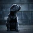 How it's made: hondenfotografie met Chris van Riel