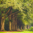 Collectie Mooiste Parken van Nederland