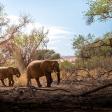 Highlights van Namibië - Met de LUMIX G9