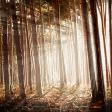 Photoshop: Gefilterde zonnestralen