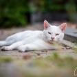 Buiten aan de slag: de kunst van katten fotograferen