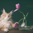 Collectie Ondeugende Katten