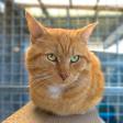 Huisdieren fotograferen met je smartphone