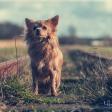 Fotografeer je eigen hond: de basis