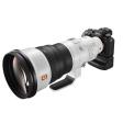 Lichte grote jongen - Sony FE 400mm F/2.8 GM OSS