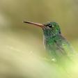 Lenzen bij natuurfotografie: tips van Zoomers