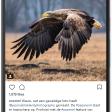 Het verhaal achter deze indrukwekkende Instagramtopper!