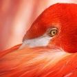 Basiscursus vogelfotografie