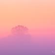 Spoedcursus: Misty Morning