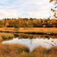 6 prachtige herfstlocaties in Nederland om te fotograferen